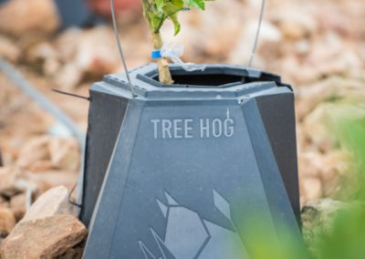 Treehog-10 (Large)